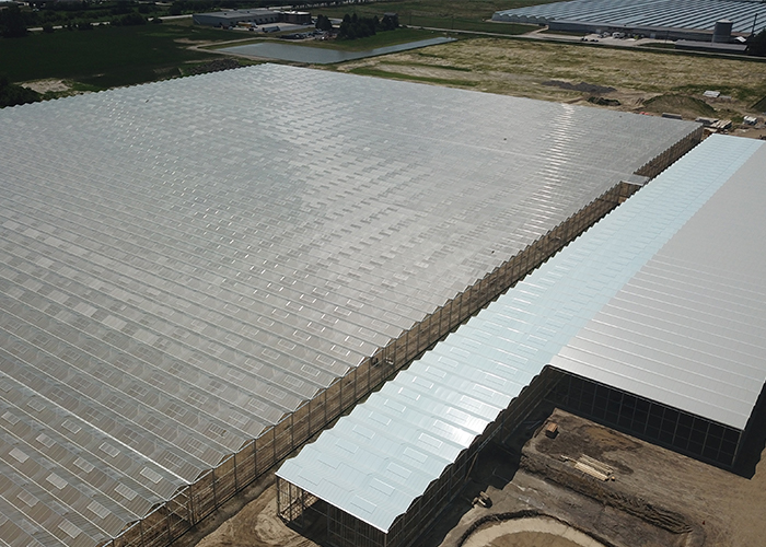 Red Sun Farms Announces high-tech greenhouse growth in Canada, the USA, and Mexico.