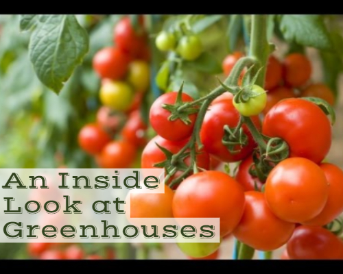 An Inside Look at Greenhouses