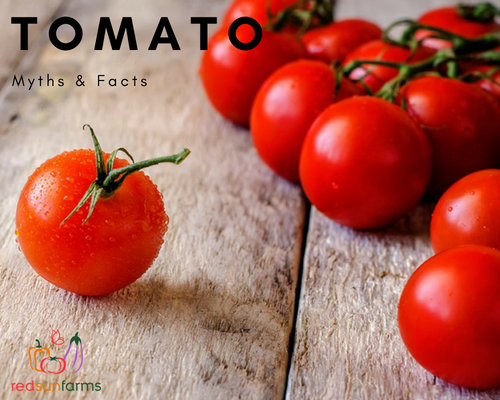 Tomato Myths & Facts