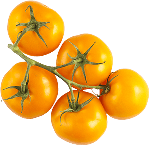 Orange Tomatoes on the Vine